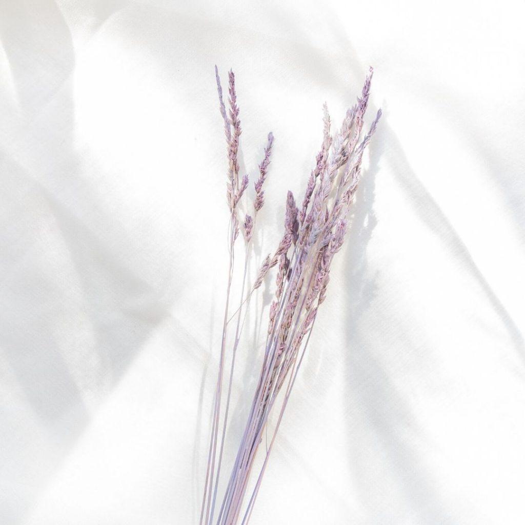Trockengräser flieder / lila färben
