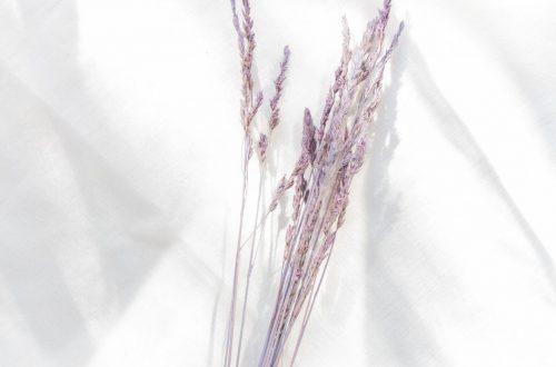Trockengräser färben rosa pink lila flieder
