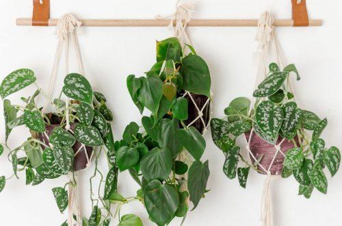 DIY Halter für Pflanzen uvm.